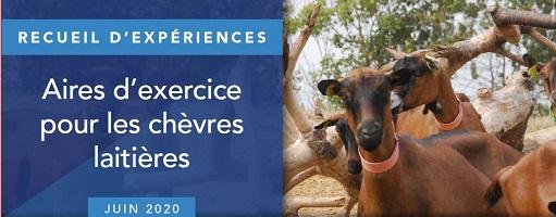 Aire d'exercice pour les chèvres